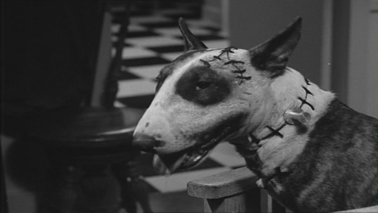 Frankenweenie en live action par Tim Burton